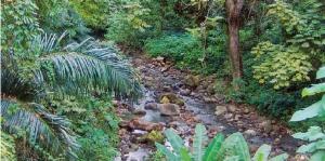 Ringler's jungle route