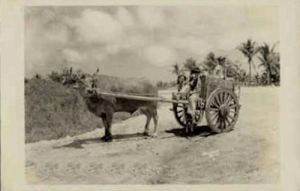 Guam postcard, 1940's
