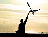 Seagull Feeding 001