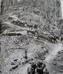 Men & horses transport equipment down a stretch of Kokoda Track near Ower's Corner.