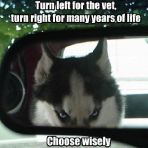 dog-humor