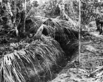 Japanese coconut palm bunker at Buna