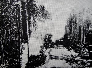 Part of the highway created through virgin forest.