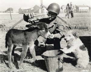 GI Jenny, the burro mascot of the Army in North Africa, with Cpl. William Wende & Pito, 1943