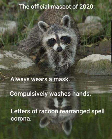 https://pacificparatrooper.files.wordpress.com/2020/05/racoon.jpg